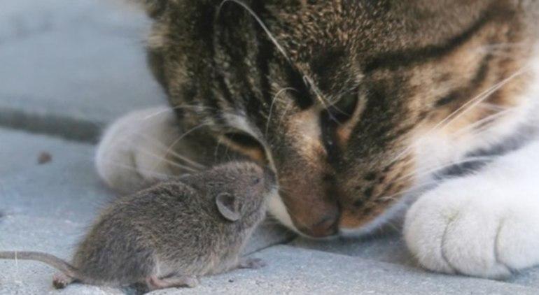 мышей во сне