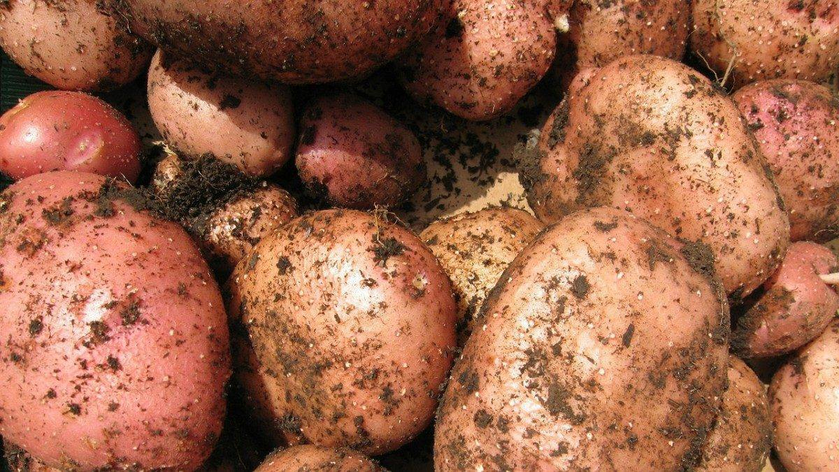 картошку во сне