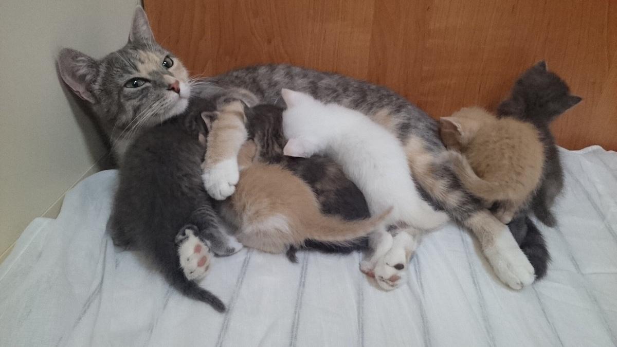 Сонник родила кошку во сне
