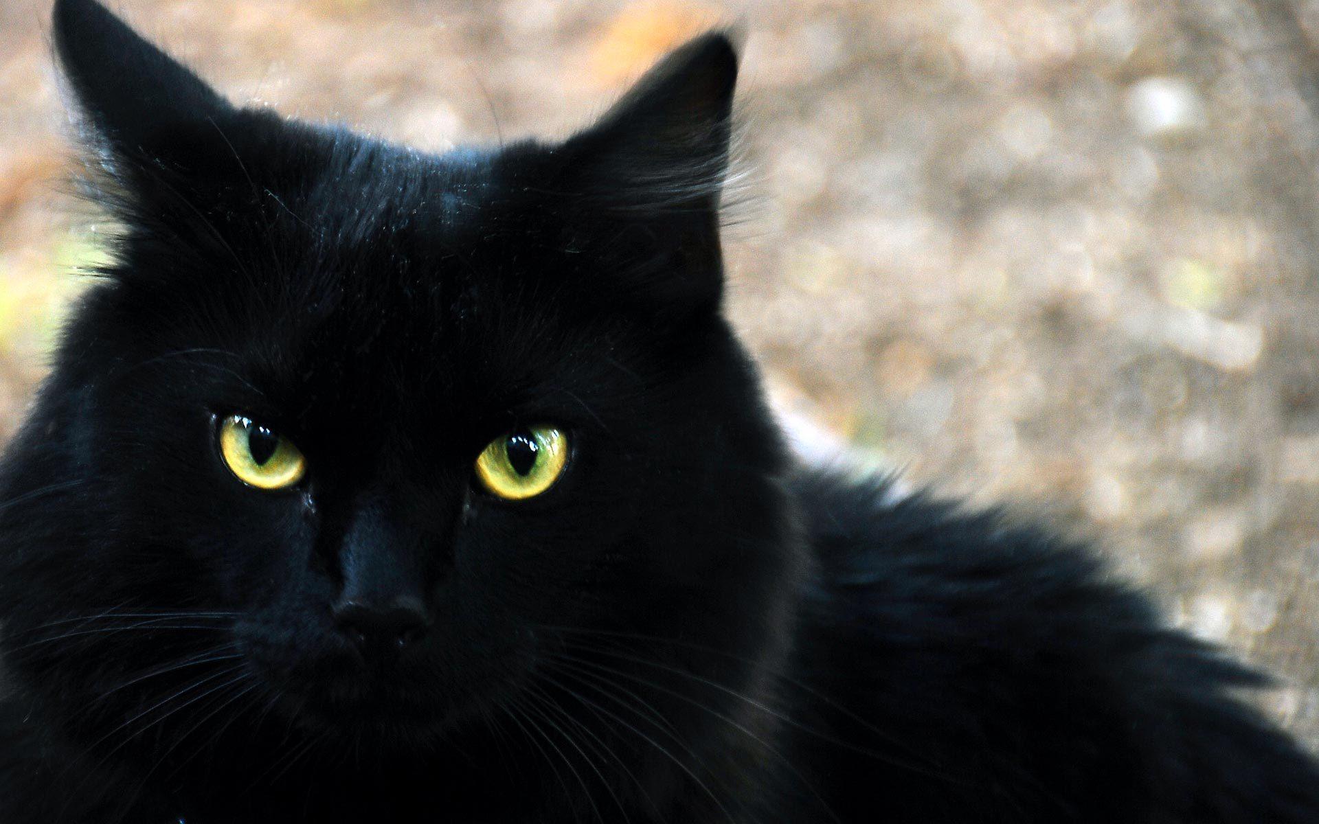 Видеть во сне черная кошка значение