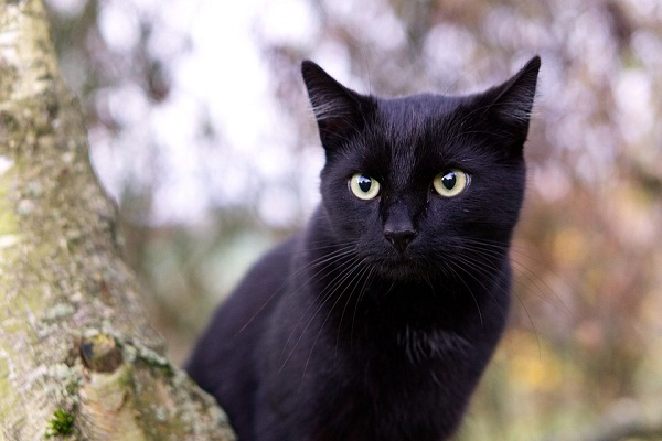 Видеть во сне черного котенка значение