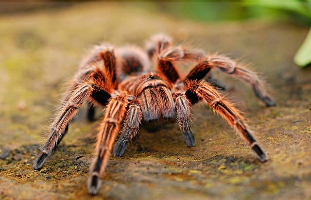 Видеть во сне черного паука