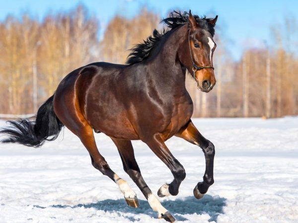 Видеть во сне лошадь