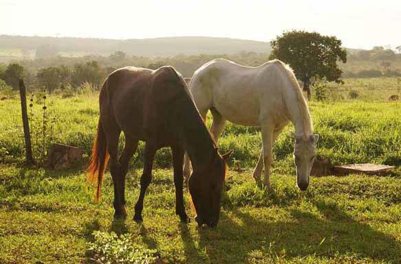 Видеть во сне лошадь значение