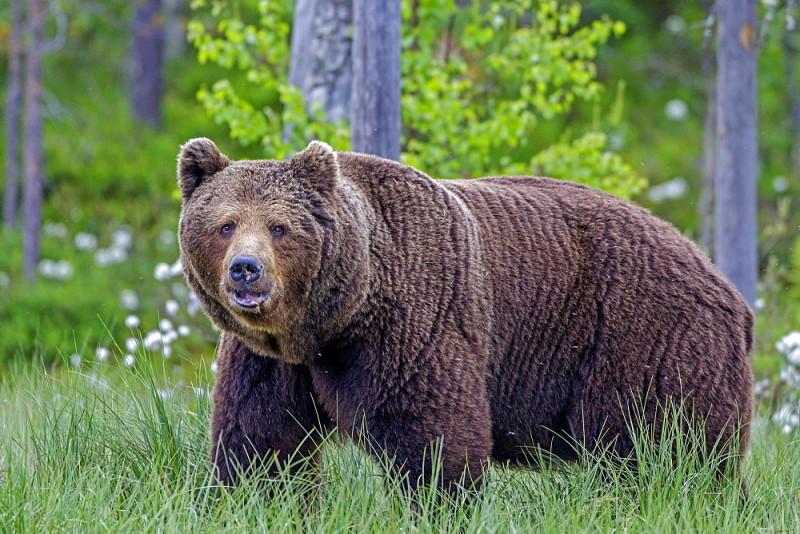 Видеть во сне медведя значение