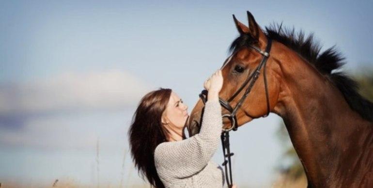 гладить лошадь