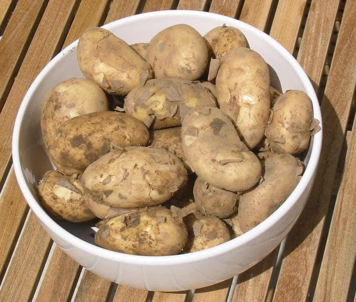 Сажать картошку