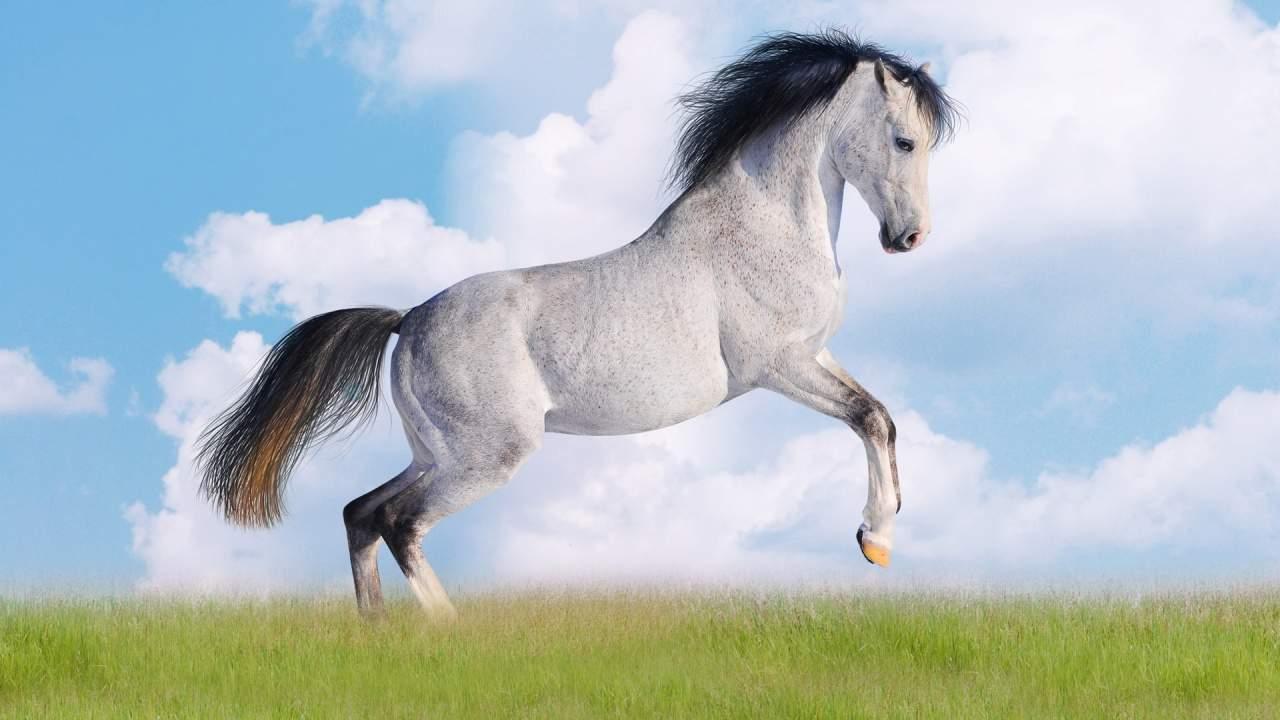 Скакать на лошади