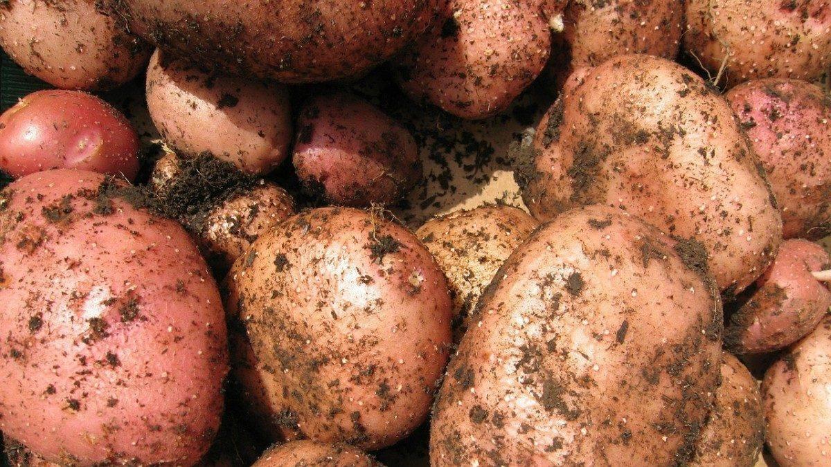 картошка к чему