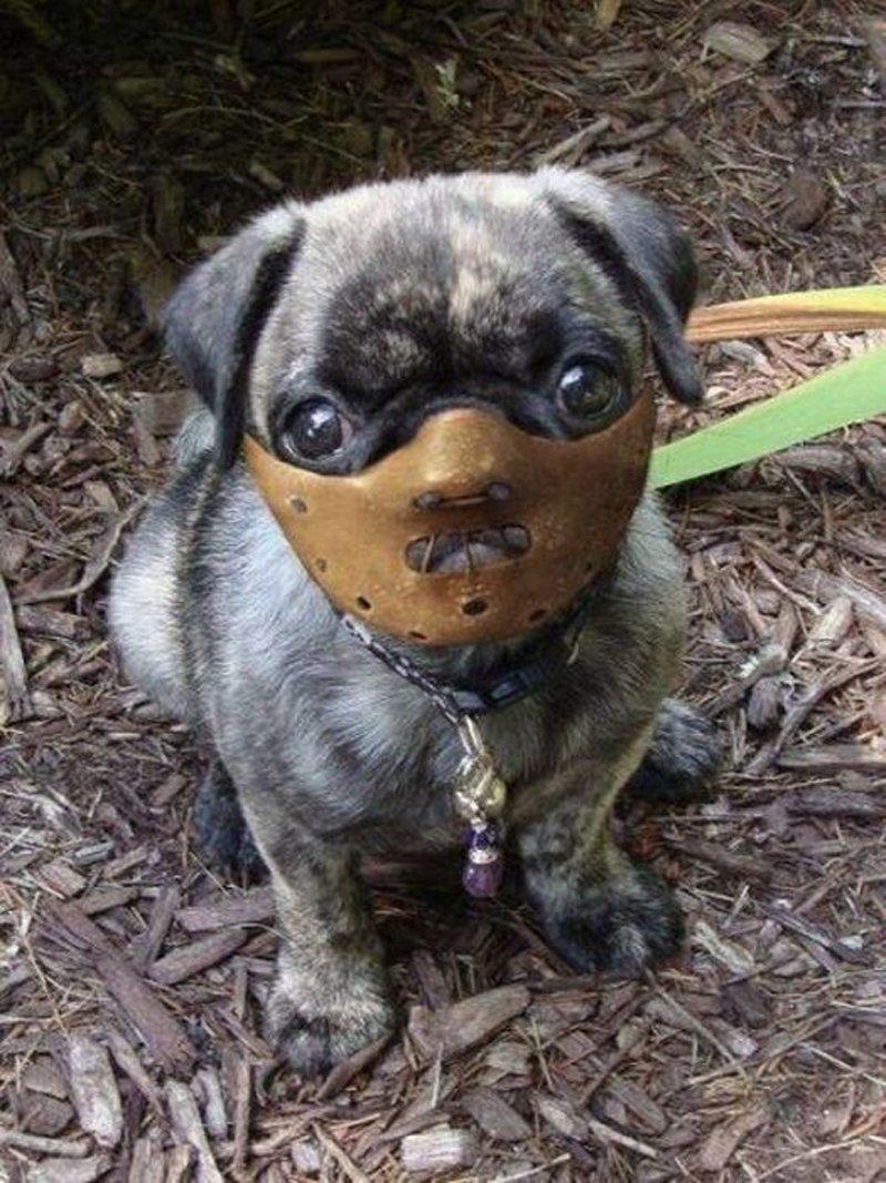Снится убийство собаки