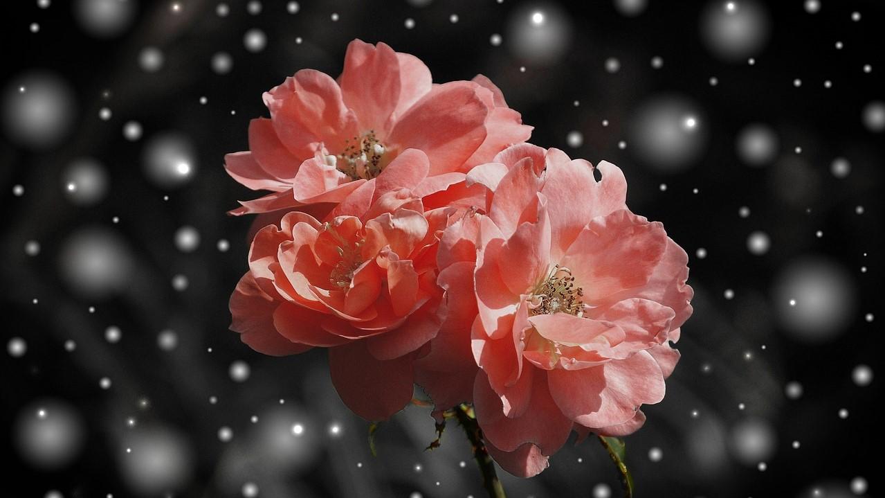 снится много цветов