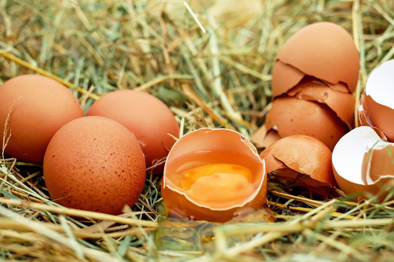 собирать яйца куриные