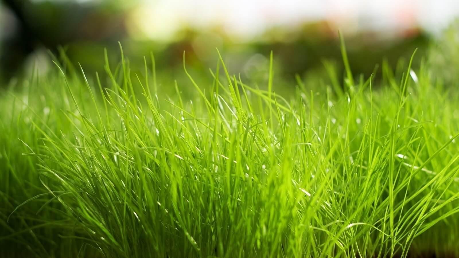 снится зеленая трава