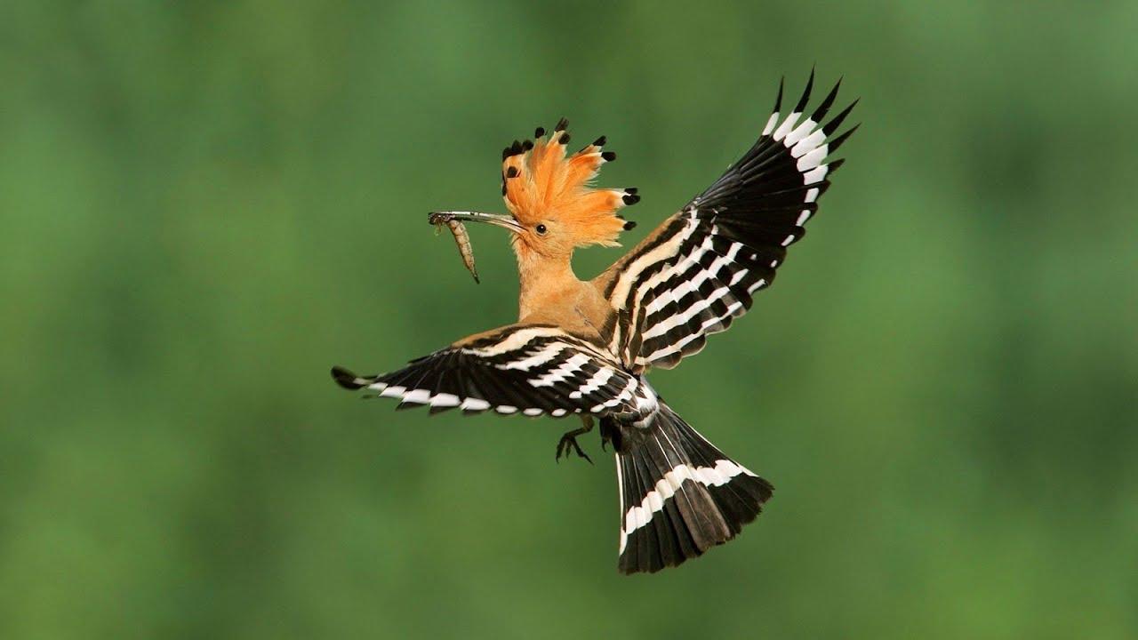 к чему птицы