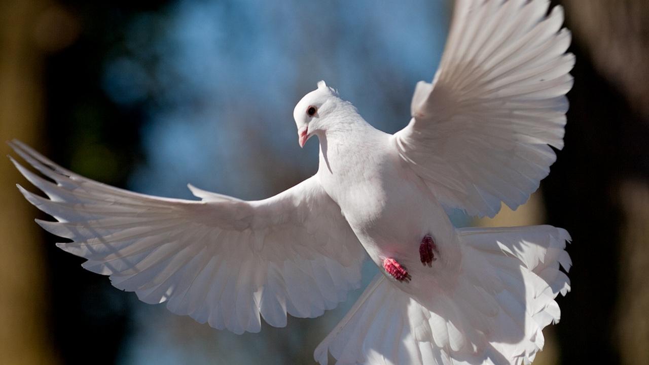 птицу во сне руками