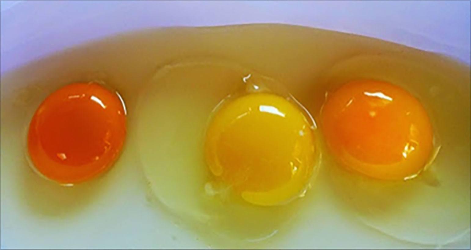 Приснились яйца в скорлупе