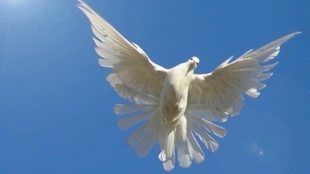 Снится белая птица