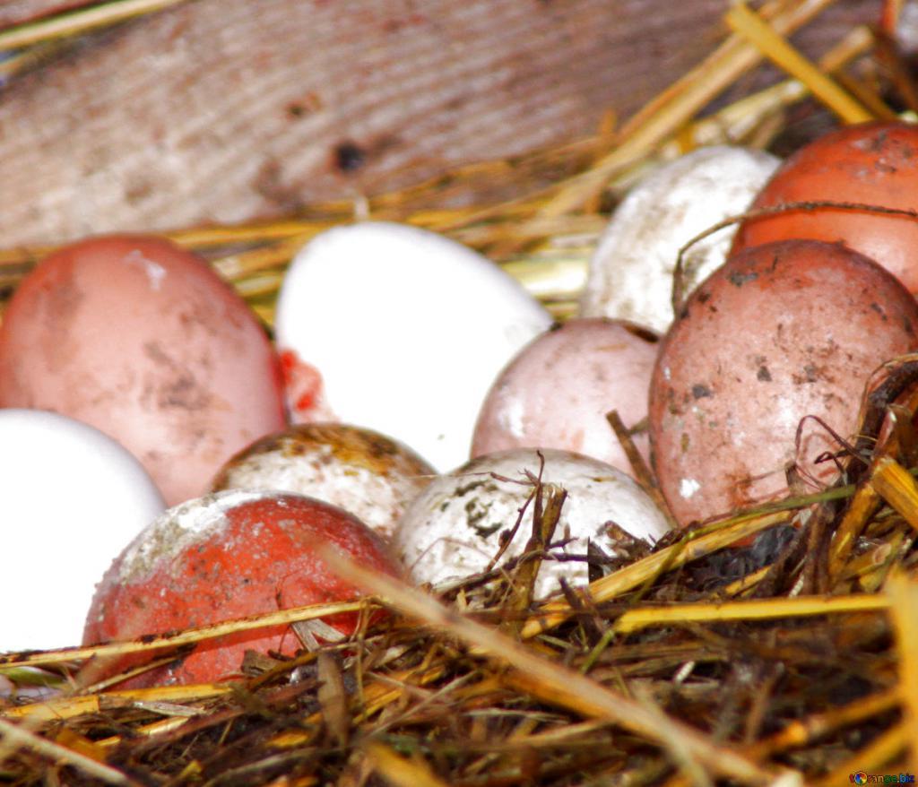 Собирать во сне яйца