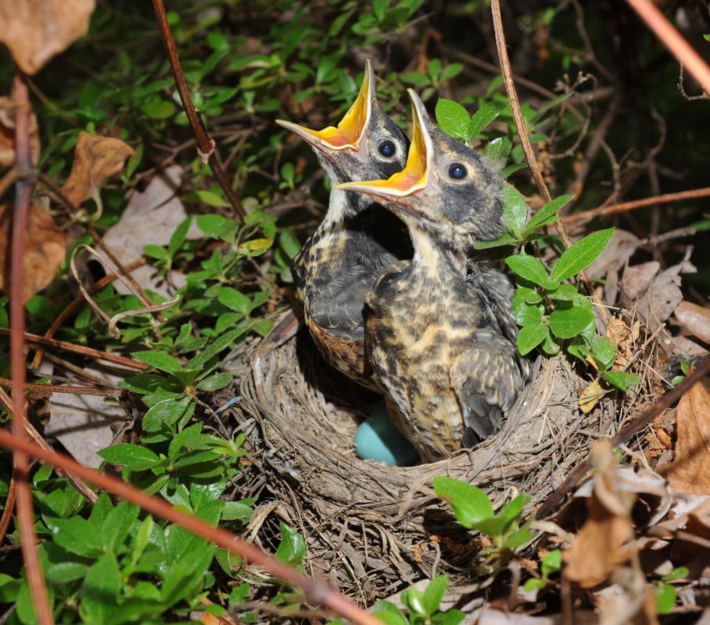 Видеть во сне птичек значение