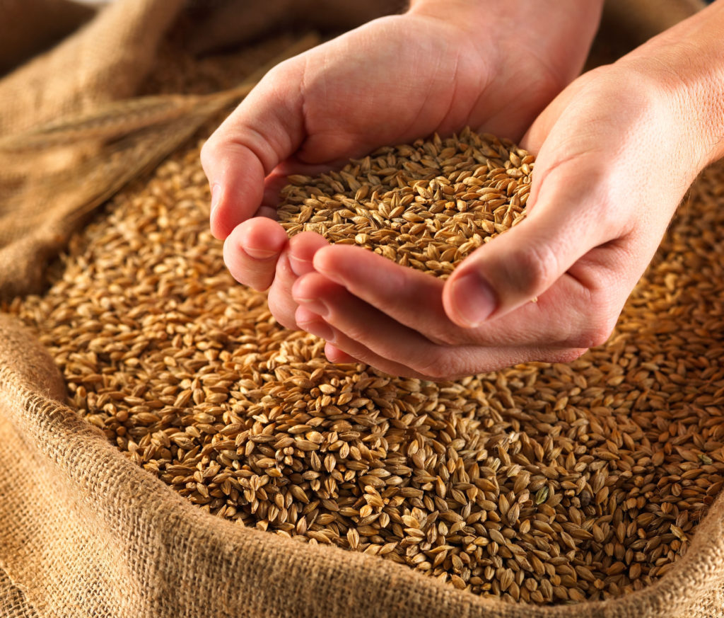 Зерно во сне