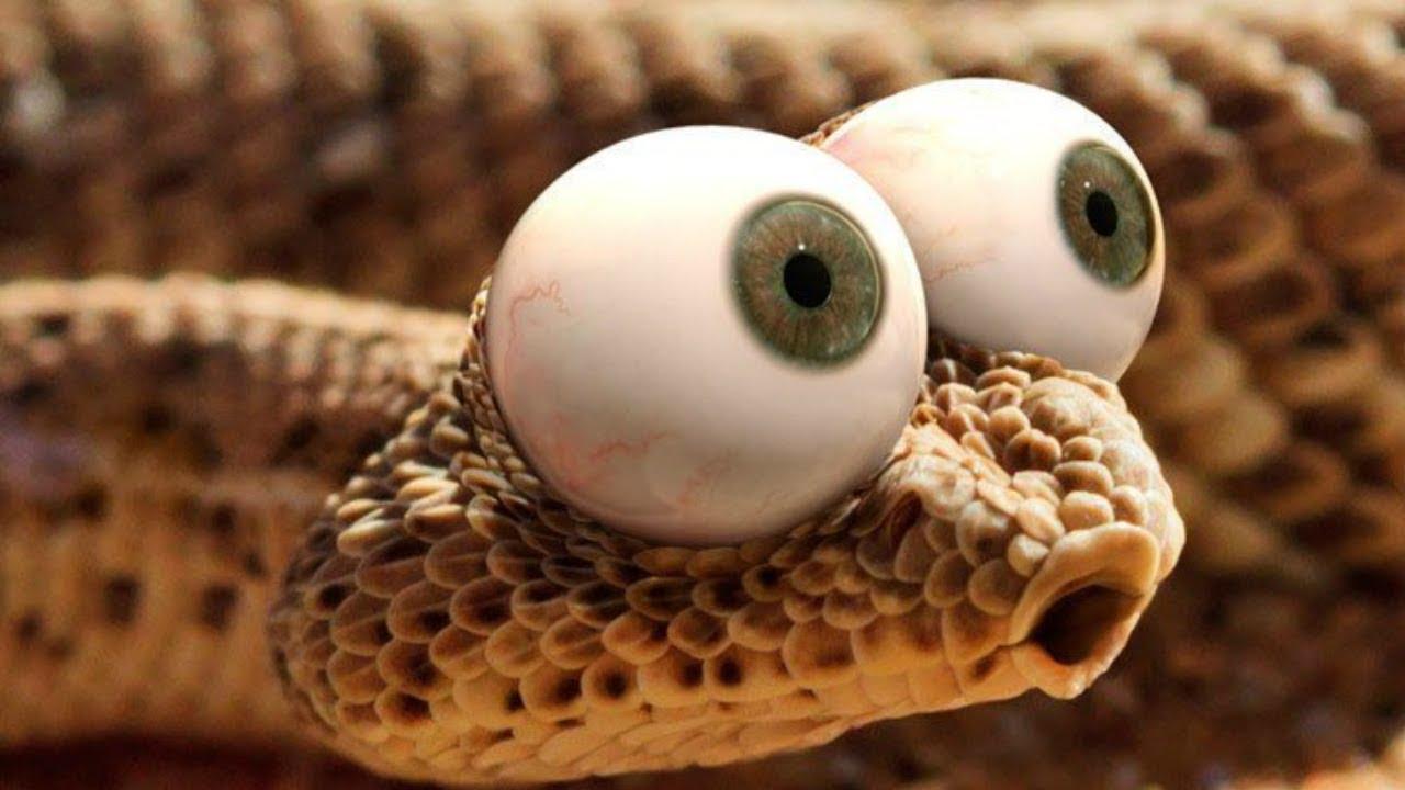 Душить змею