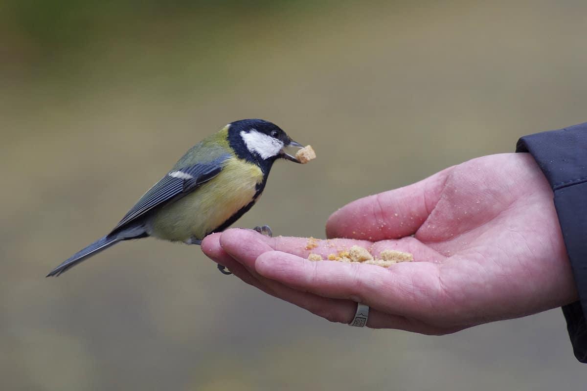 К чему снится маленькая птичка