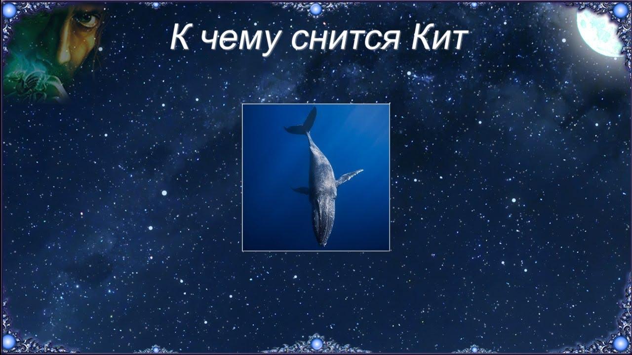 К чему снится кит общее