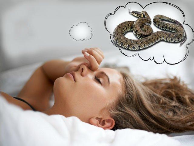 К чему снится много змей: толкование сновидения