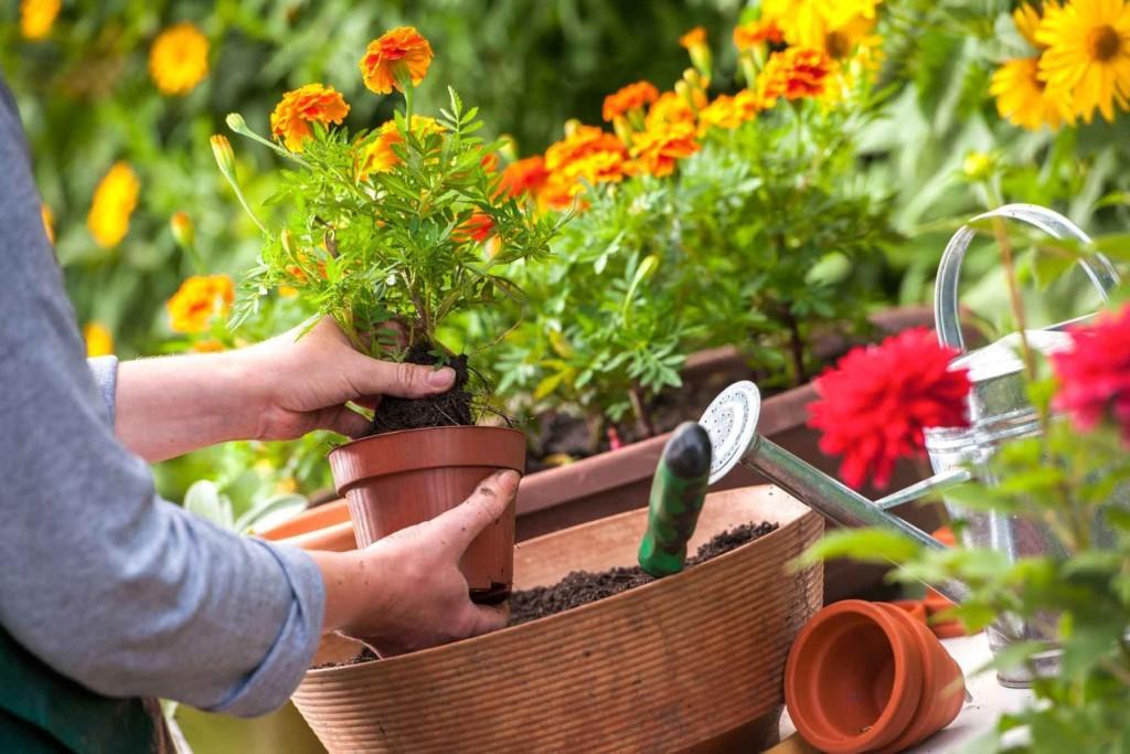 одно картинка сажать сад большое