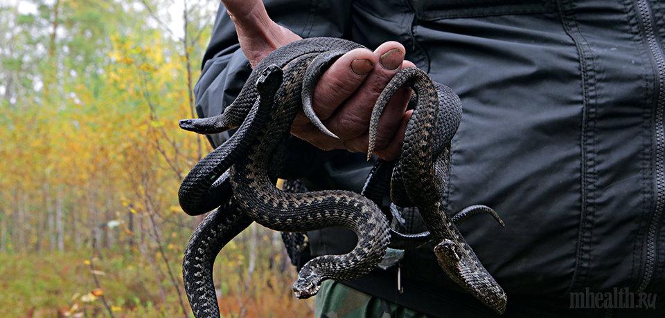 Ловить змей во сне значение