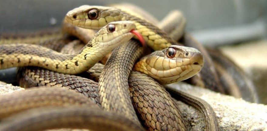 Местонахождение змей во сне