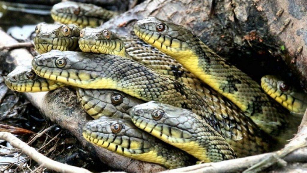Приснилось много маленьких змей
