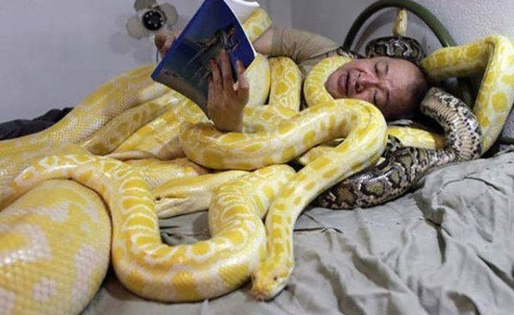 Видеть во сне много змей: значение для женщины, девушки и мужчины