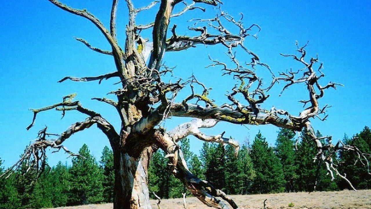 К чему снится большое зеленое дерево