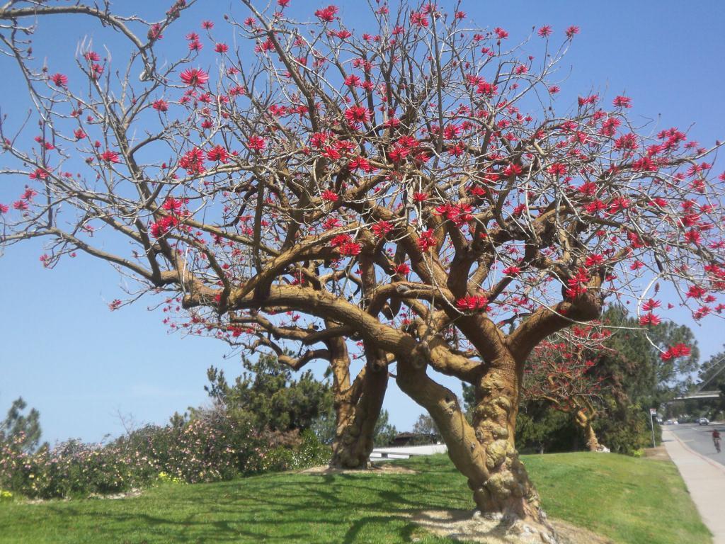 Приснилось дерево без листьев